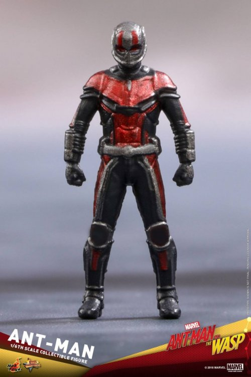 Ant-Man-And-The-Wasp-Hot-Toys-Ant-Man-11.jpg